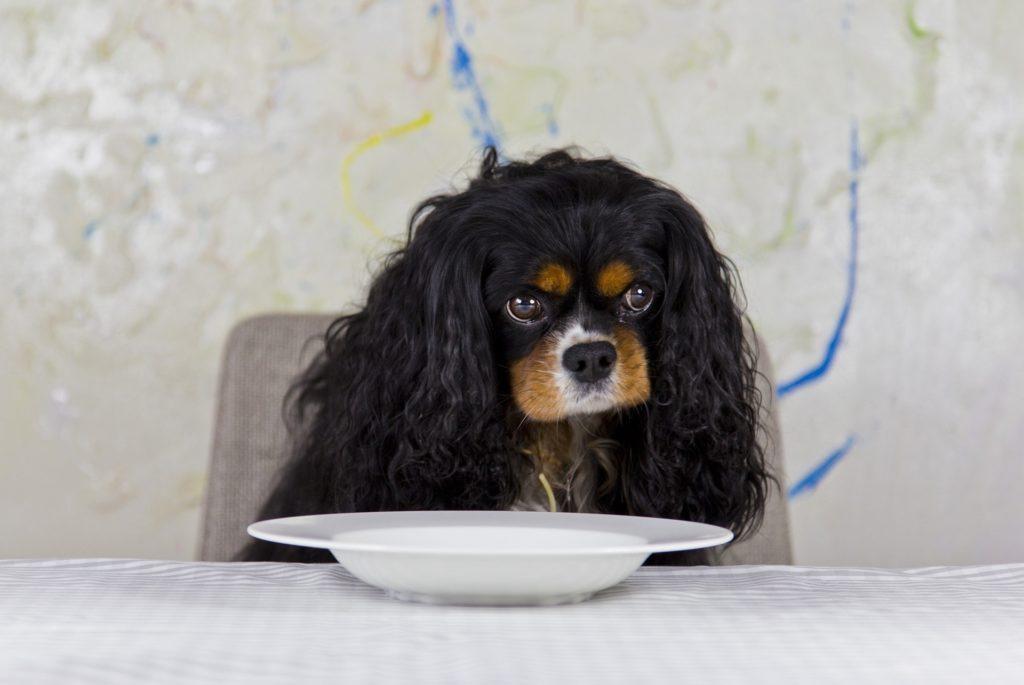 un chien à table prêt à manger