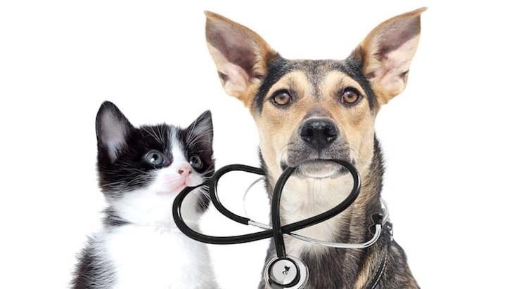 Un chien et un chat tenant un stéthoscope