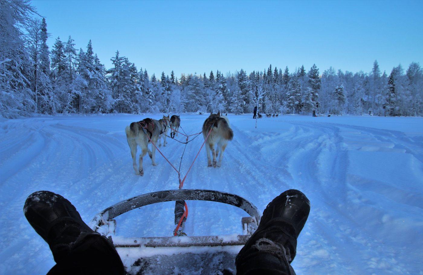 musher guide chiens de traineau dans la neige