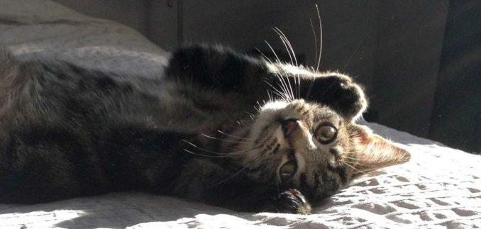 Chat sur le dos sur un lit d'appartement