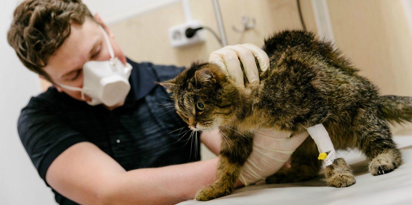 Vétérinaire coronavirus chat